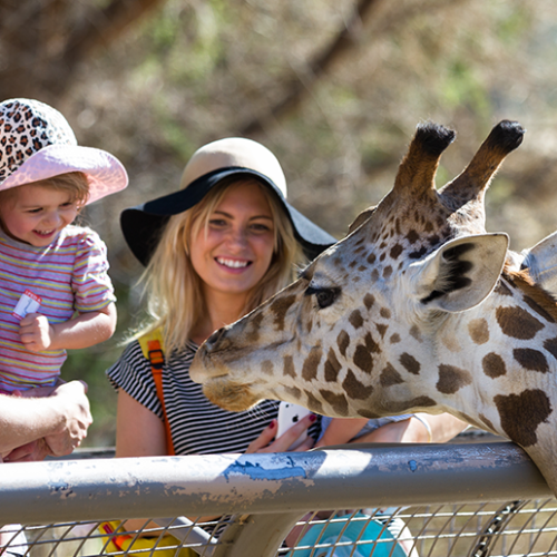 Four fun-packed family day trips in Abu Dhabi